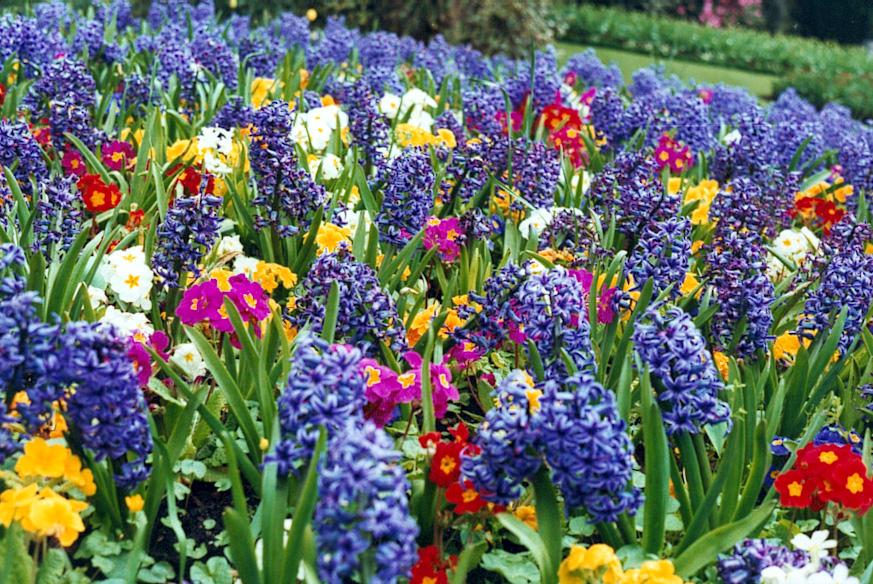 Flors a primavera